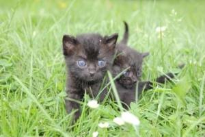 Neugierige Katzenwelpen